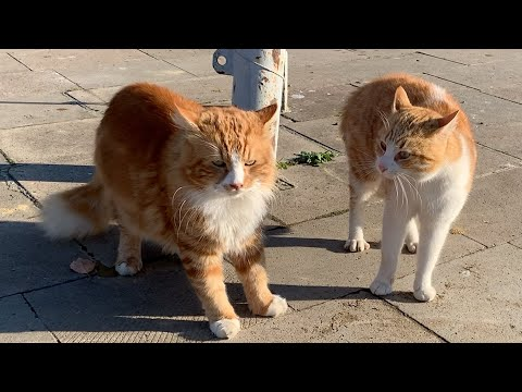 Four male cats fighting for territory