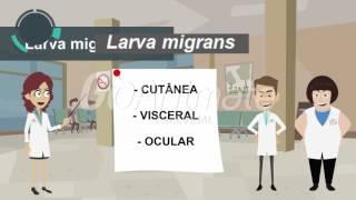Larva migrans-Parasitologia
