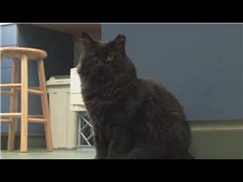Cat Health & Care : Deworming Your Cat