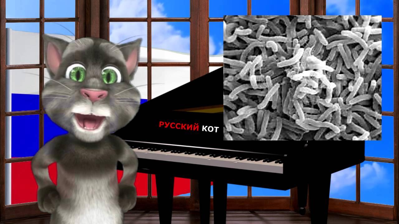 Русский Кот - Чёрный юмор
