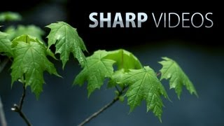 connectYoutube - How to get sharp & detailed videos! DSLR video tutorial
