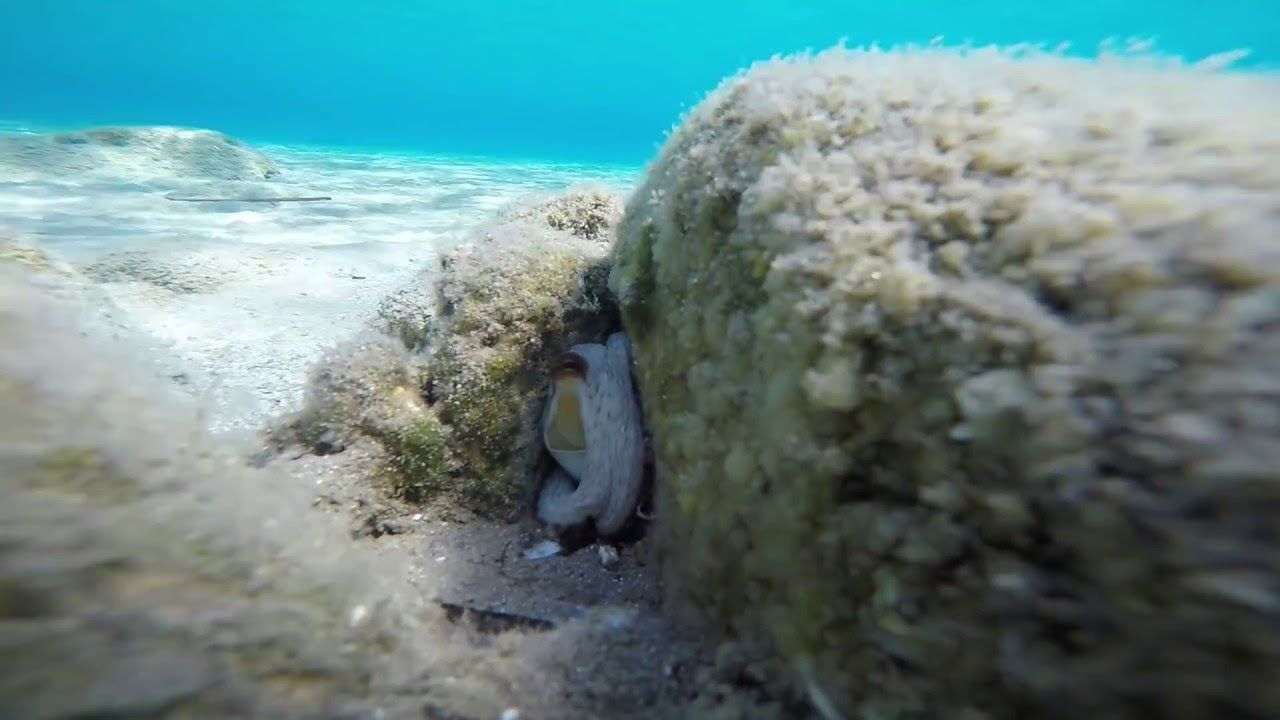 WHY I STOPPED SPEARFISHING.Baby octopus+ moray.Kos island.Κέφαλος-Κως.Χταπόδι μωρό&σμέρνα.