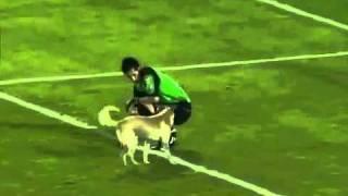 Пёс на футбольном поле троллит всех