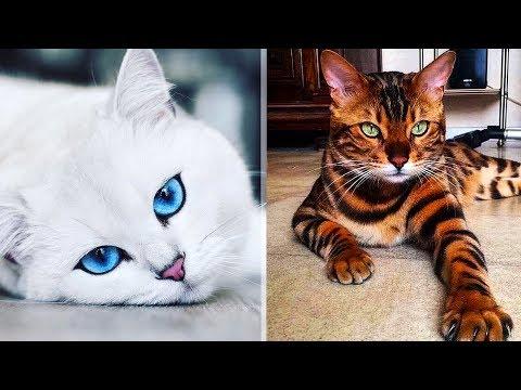 11 невероятных котов, которые стали известными на весь мир
