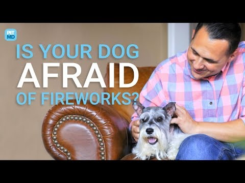 Justin The Web Guy - How To Keep Your Best Friend Calm During The July 4th Fireworks!