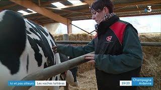 Alison Jobard éleveuse de vaches laitières dans l'Aube