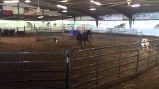 Chenelle- Jared Lesh cowhorses