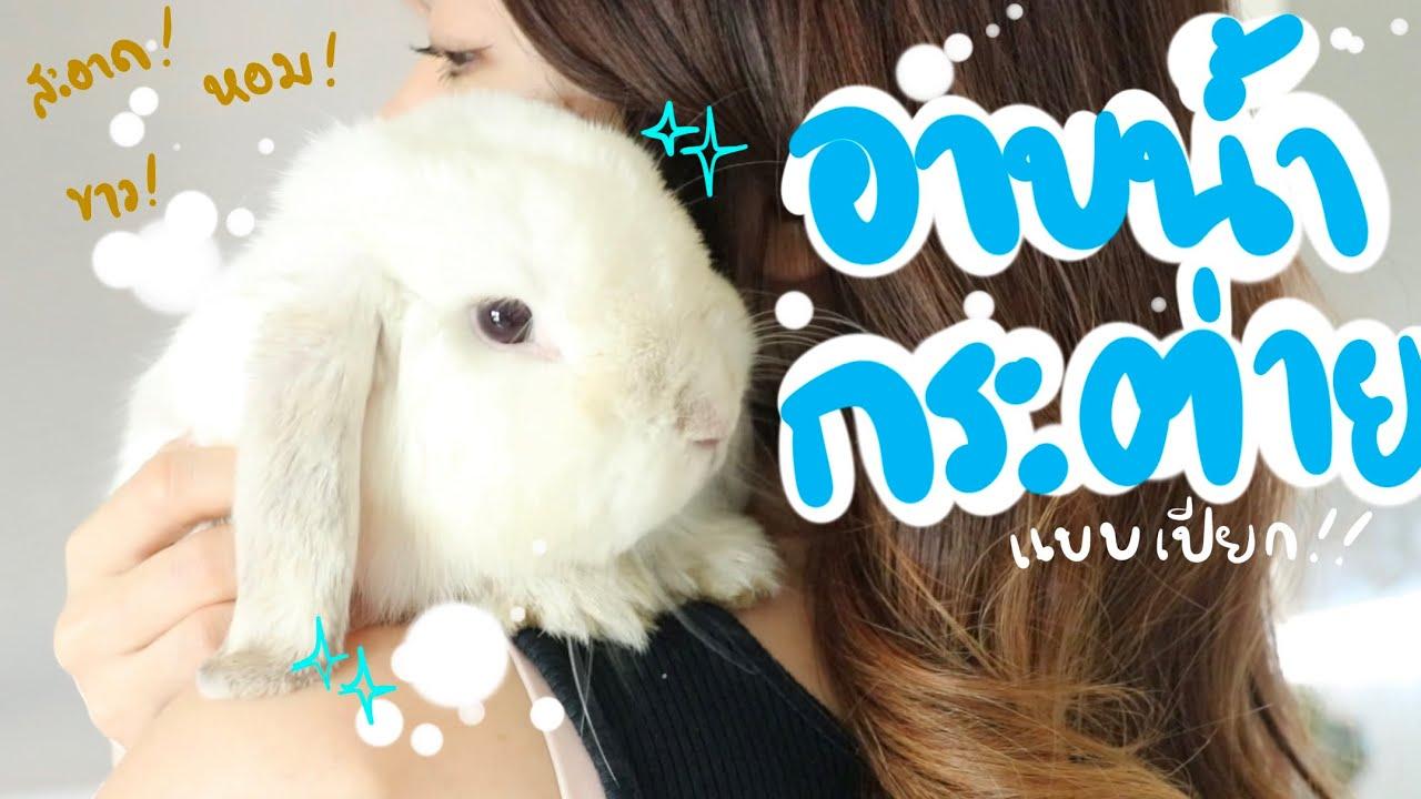 Download EP.20 อาบน้ำกระต่าย นอนทับฉี่ ขนเลอะ! ทำไงดี #BunnyTTCoupe | Joyjee Loveberry