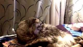 Кот смотрит телевизор / Том и Ну, погоди! Любимый мультфильм Ну, погоди!