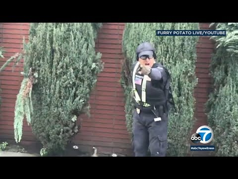 Security guard caught on video shooting woman in leg outside LA synagogue | ABC7