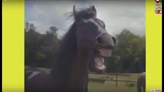 Hài Hước với Động Vật | Ngựa và Sư Tử Cười Khà khà Khà | Động Vật Hài