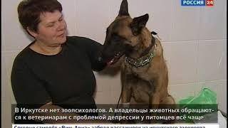 «У моего котика депрессия!» В Иркутске нет зоопсихологов, а пациентов масса