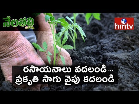 West Godavari Farmers Show Interest On Organic Farming | Guidance By ATMA foundation | hmtv