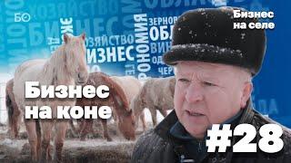 Бизнес на селе # 28. Бизнес на коне: как фермер с 8 классами образования разбогател на лошадях