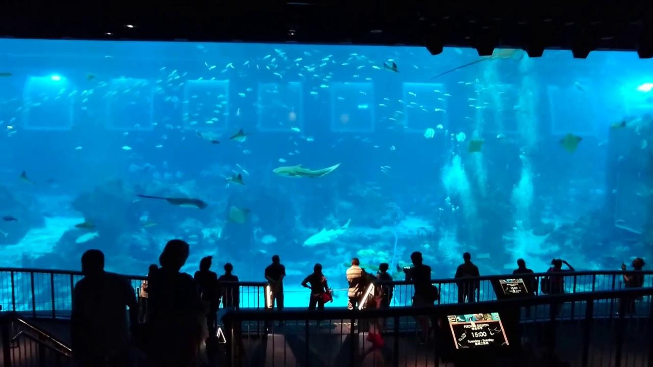 S E A Aquarium Sentosa Island Singapore