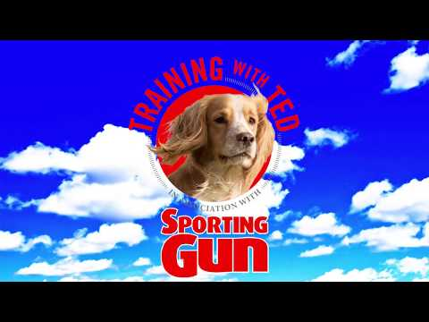 Gundog Training - 'Training With Ted'  - The Place-board