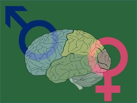 EMP Neurociencias: Diferencias entre mujeres y hombres