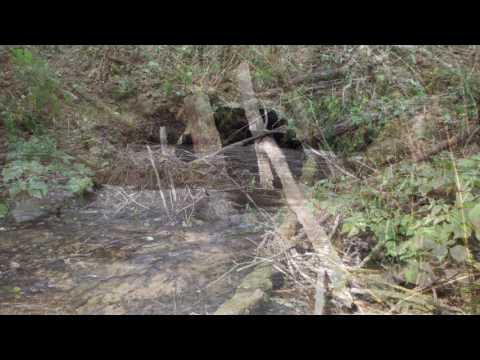 Family Forest Fish Passage Program - Olequa Creek