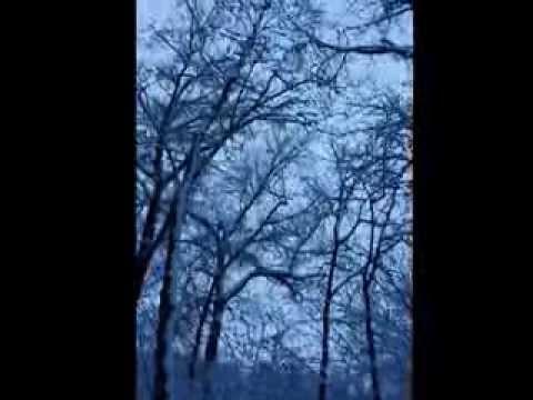 Lake Mohegan Snowy Trail Running, Fairfield CT