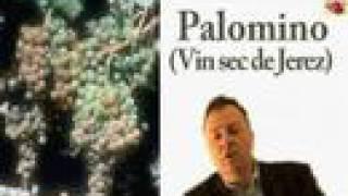 Les vins d'Espagne : cours académie du vin