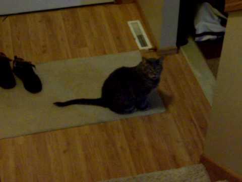 battle cats cat food hack
