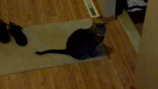 smokey the nonstop talking cat meowing meow and piglet the black panther 25 lb feline kitty kitten