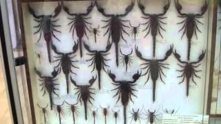 Crustacea. Класс ракообразные.