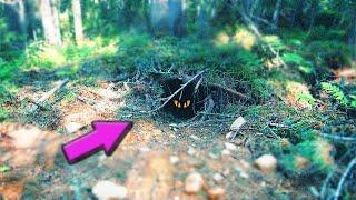 Что Внутри Лесной Берлоги? 👀