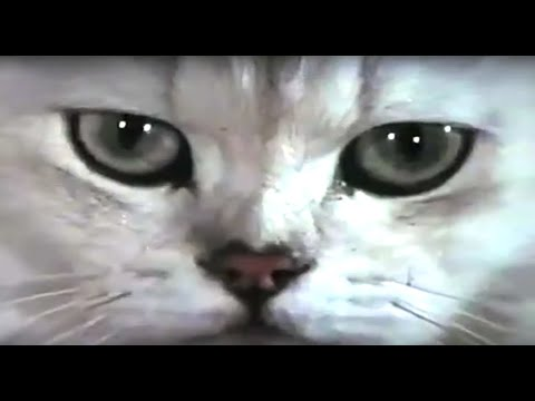 Supercut: Cats In Films (Year Of The Cat)