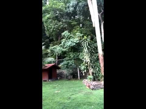 Panama - Garden
