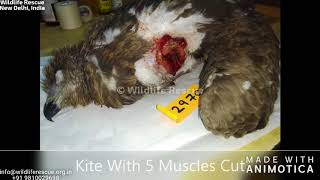 Surgical Wound Repairs at Wildlife Rescue