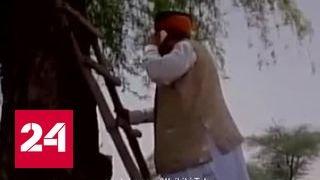 Индийский министр залез на дерево, чтобы позвонить