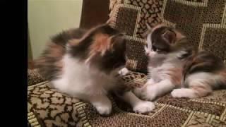 Про трёх котят и их маму-кошку Матрёшку