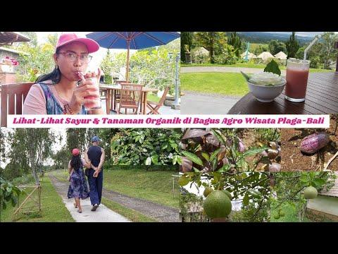 #16-lihat-lihat-sayur-&-tanaman-organik-di-bagus-agro-wisata-plaga-bali