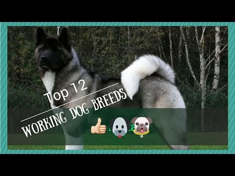 Top 12 Working Dog Breeds