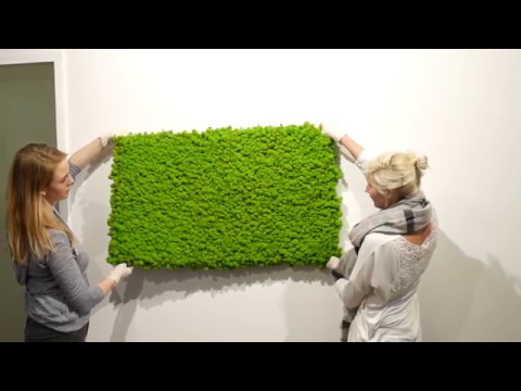 Moss wall DIY solution from styleGREEN - YouTube