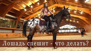 Разбираем проблему, когда лошадь спешит. Конный спорт. Тренировка. Темп и ритм. Верховая езда.