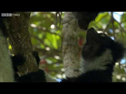 Madagascar's Precious Wildlife Is Slipping Away - Madagascar - BBC Two