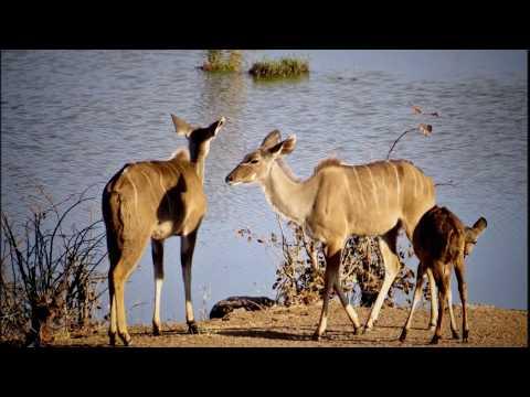 Paula's African Art Safari