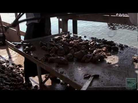Oyster Season Shutdown-Texas Parks and Wildlife [Official]