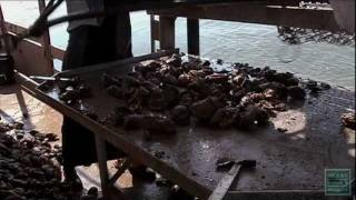 Oyster Season Shutdown-Texas Parks and Wildlife [Official]