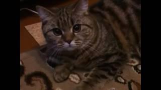 Моя кошка самая добрая)