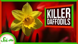 Good News: Daffodils Are The Worst