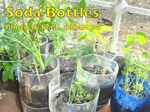 A Choice of Containers to Grow Plants - Part 2