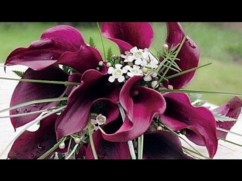 burgundy-calla-lilies-wedding-bouquet