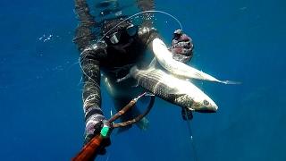 1x2 kefal, zıpkın avı, balık avı, spearfishing, zıpkınla balık avı, ömer bırak