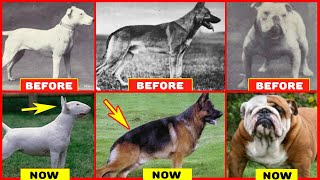 Years of Breeding Ruined Popular Dog Breeds
