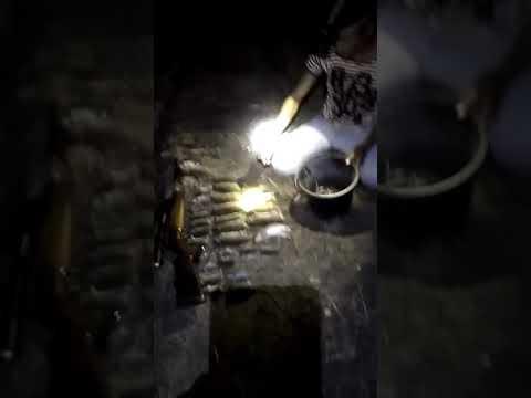 Membasmi tikus di sawah