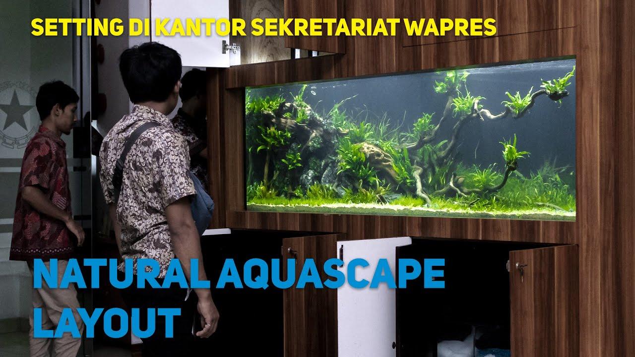 Setting Natural Aquascape Layout Youtube