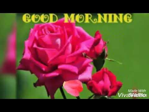 Good Morning Tamil Songs Whatsapp Video Youtube